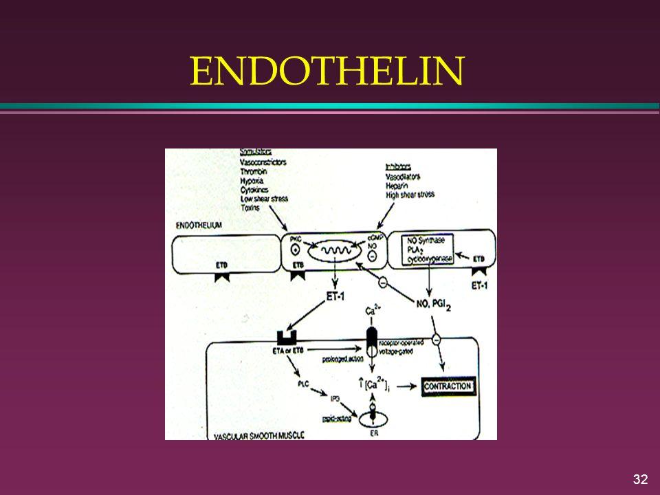 32 ENDOTHELIN