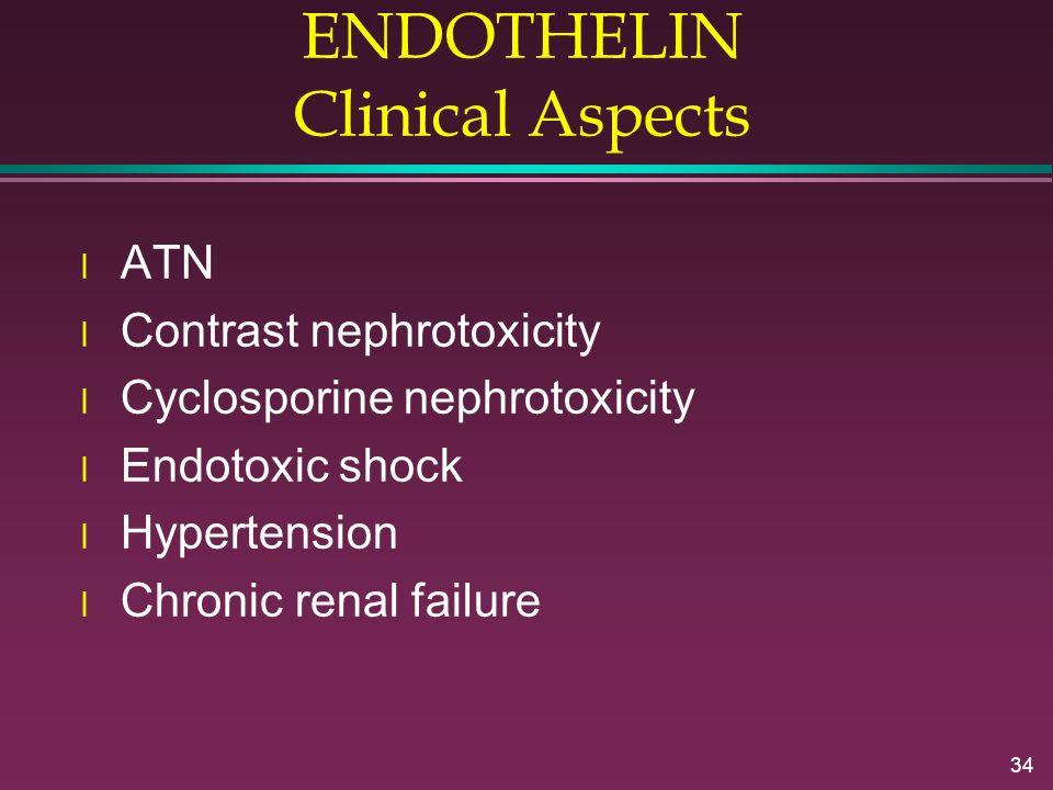 34 ENDOTHELIN Clinical Aspects l ATN l Contrast nephrotoxicity l Cyclosporine nephrotoxicity l Endotoxic shock l Hypertension l Chronic renal failure
