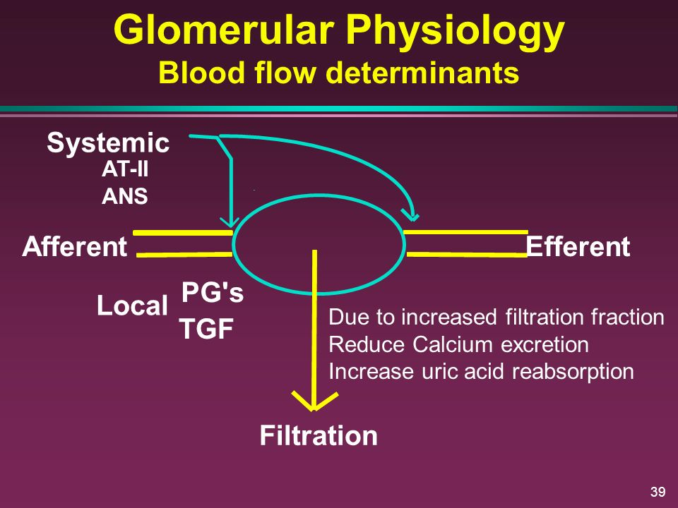39 Glomerular Physiology Blood flow determinants AfferentEfferent Filtration Systemic PG's TGF Local AT-II ANS Due to increased filtration fraction Re