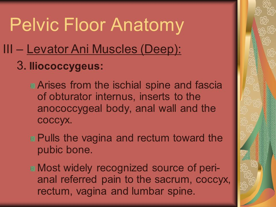 Pelvic Floor Anatomy III – Levator Ani Muscles (Deep): 3. Iliococcygeus: Arises from the ischial spine and fascia of obturator internus, inserts to th