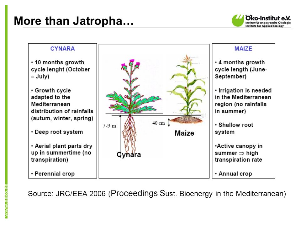 More than Jatropha… Source: JRC/EEA 2006 ( Proceedings S ust. Bioenergy in the Mediterranean)