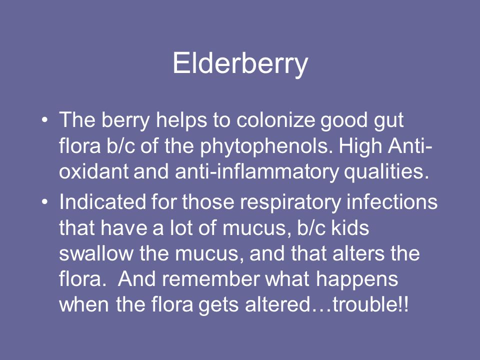 Elderberry The berry helps to colonize good gut flora b/c of the phytophenols. High Anti- oxidant and anti-inflammatory qualities. Indicated for those