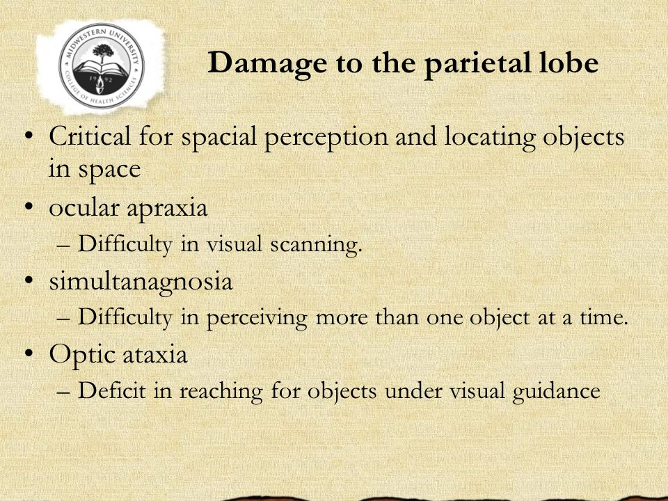 Damage to the parietal lobe Critical for spacial perception and locating objects in space ocular apraxia –Difficulty in visual scanning. simultanagnos