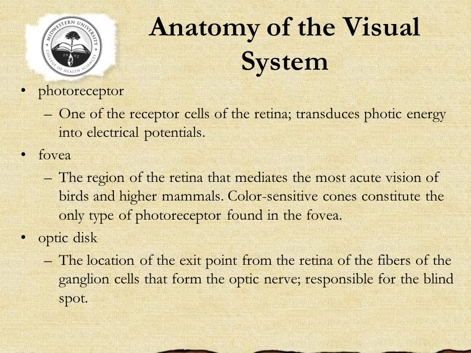 Anatomy of the Visual System photoreceptor –One of the receptor cells of the retina; transduces photic energy into electrical potentials. fovea –The r