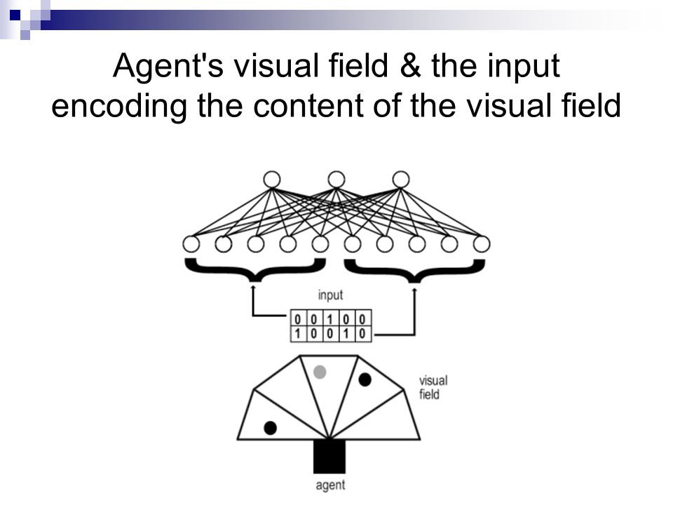 Agent's visual field & the input encoding the content of the visual field