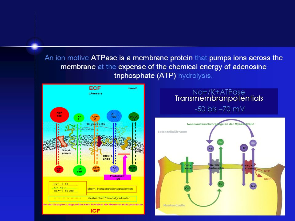 Na+/K+ATPase Transmembranpotentials -50 bis –70 mV -50 bis –70 mV An ion motive ATPase is a membrane protein that pumps ions across the membrane at th