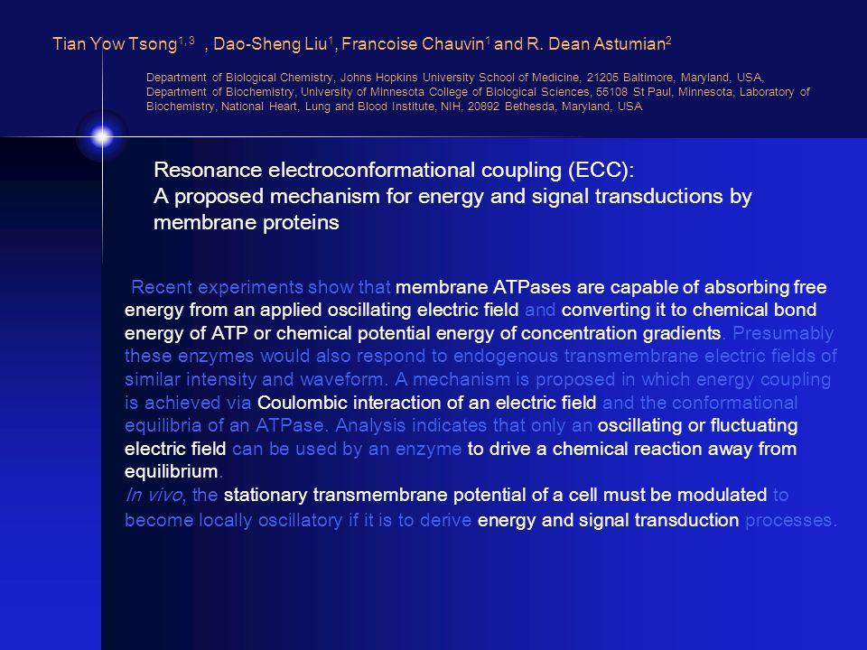 Tian Yow Tsong 1, 3, Dao-Sheng Liu 1, Francoise Chauvin 1 and R. Dean Astumian 2 Department of Biological Chemistry, Johns Hopkins University School o