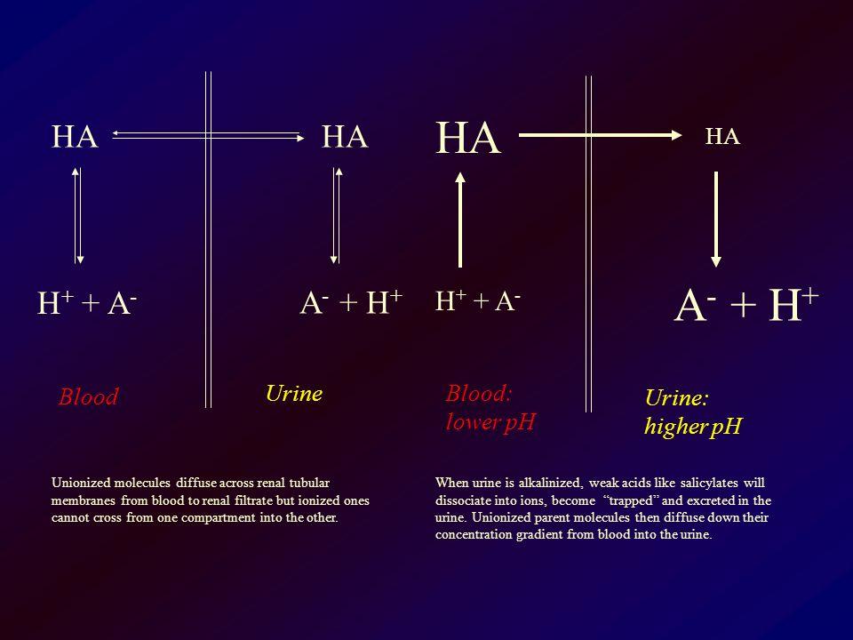 HA H + + A - HA A - + H + Blood Urine HA H + + A - HA A - + H + Blood: lower pH Urine: higher pH Unionized molecules diffuse across renal tubular memb