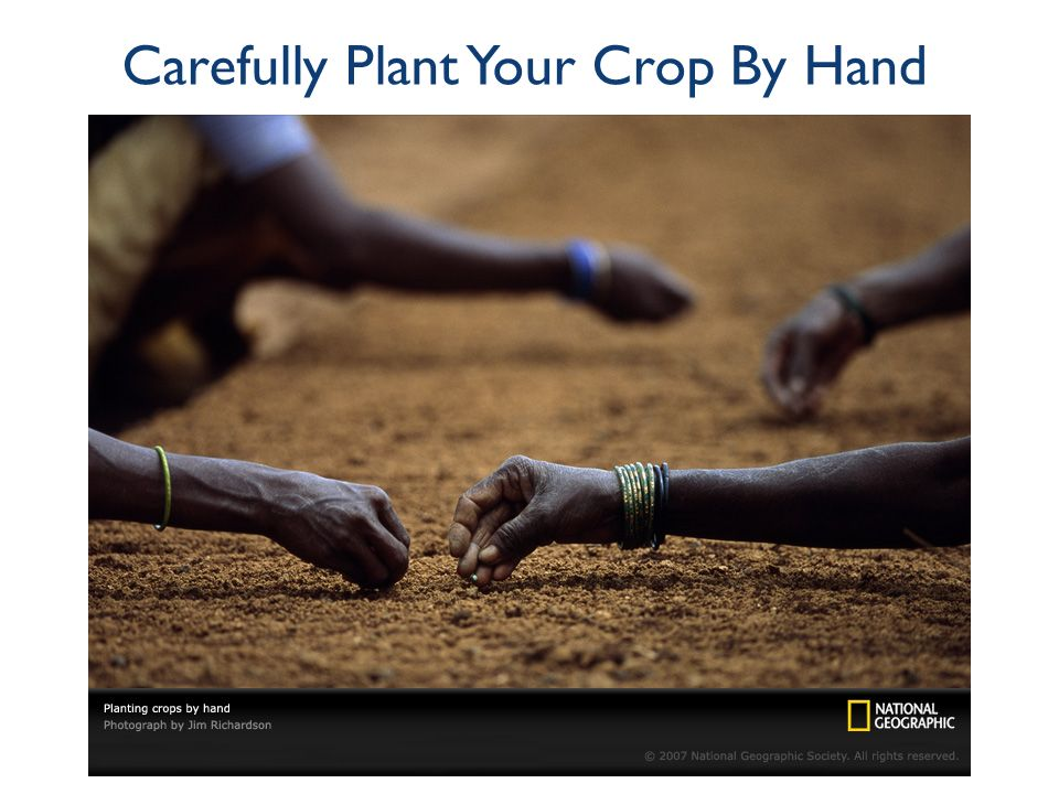 Carefully Plant Your Crop By Hand