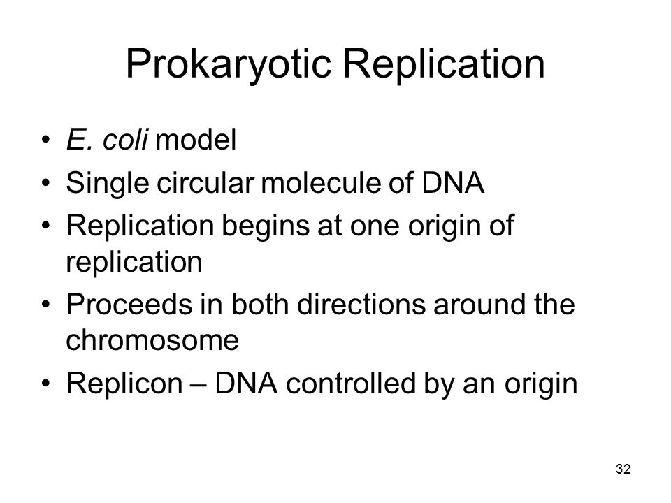 Prokaryotic Replication E. coli model Single circular molecule of DNA Replication begins at one origin of replication Proceeds in both directions arou