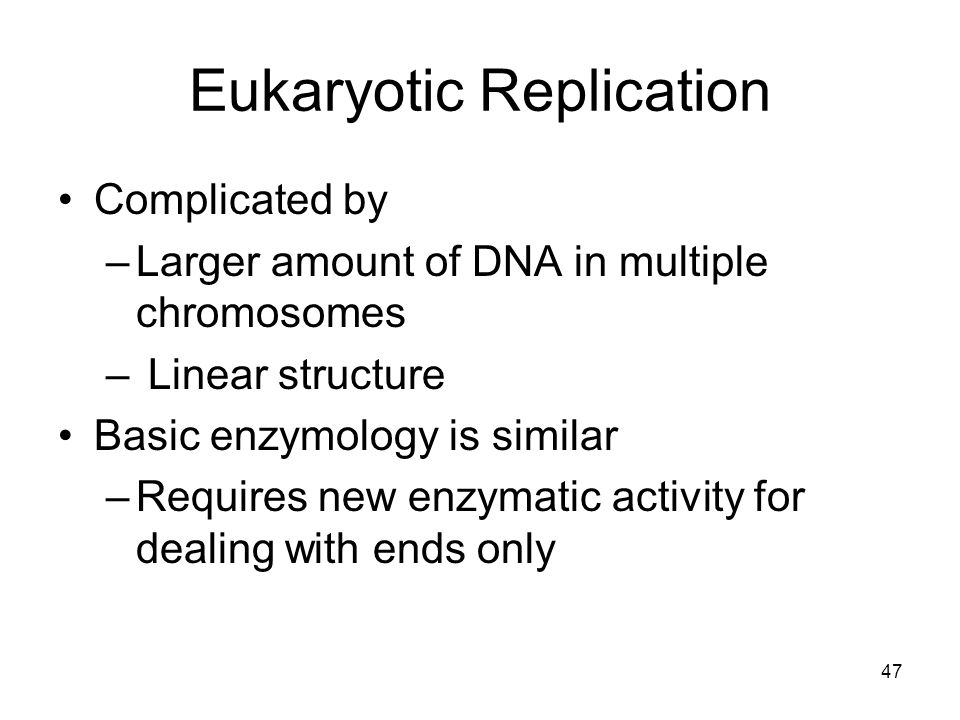 47 Eukaryotic Replication Complicated by –Larger amount of DNA in multiple chromosomes – Linear structure Basic enzymology is similar –Requires new en