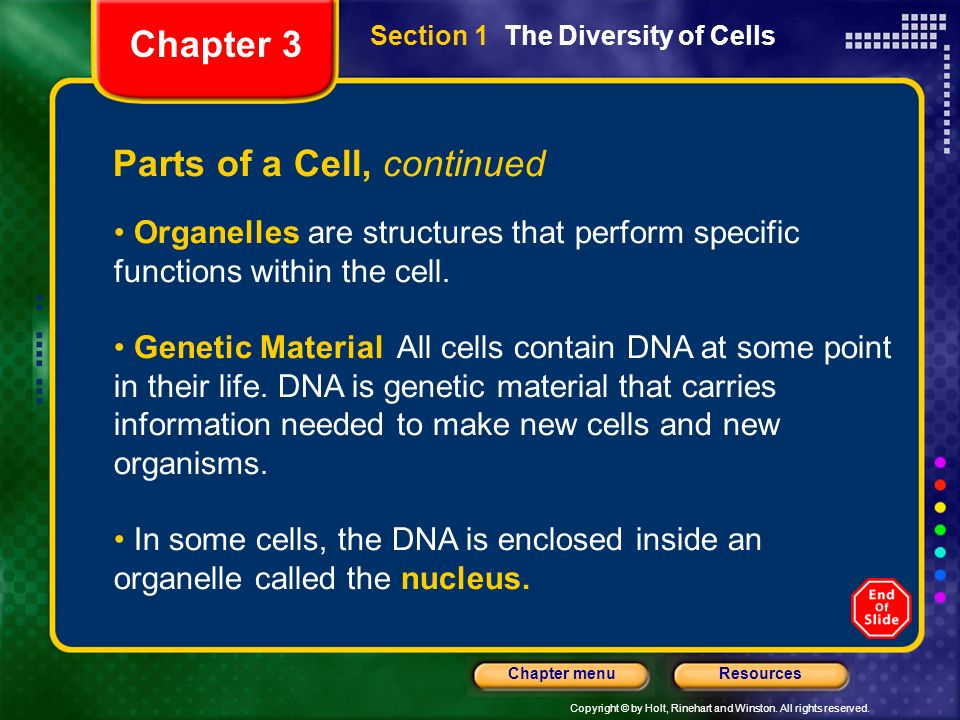 Copyright © by Holt, Rinehart and Winston. All rights reserved. ResourcesChapter menu Section 1 The Diversity of Cells Parts of a Cell, continued Orga