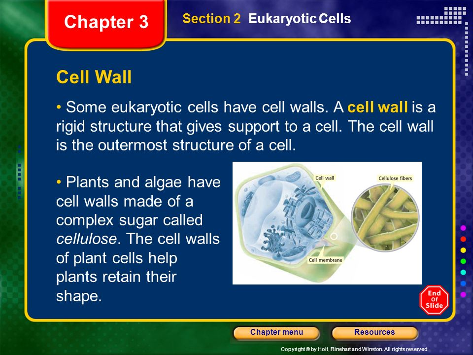 Copyright © by Holt, Rinehart and Winston. All rights reserved. ResourcesChapter menu Section 2 Eukaryotic Cells Cell Wall Some eukaryotic cells have
