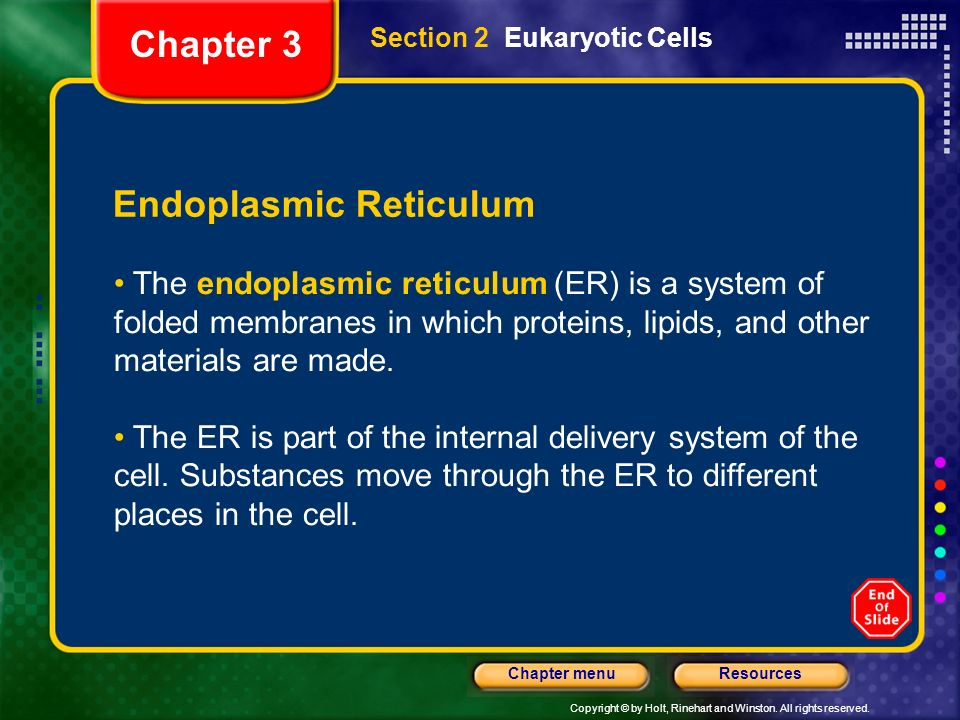 Copyright © by Holt, Rinehart and Winston. All rights reserved. ResourcesChapter menu Section 2 Eukaryotic Cells Endoplasmic Reticulum The endoplasmic