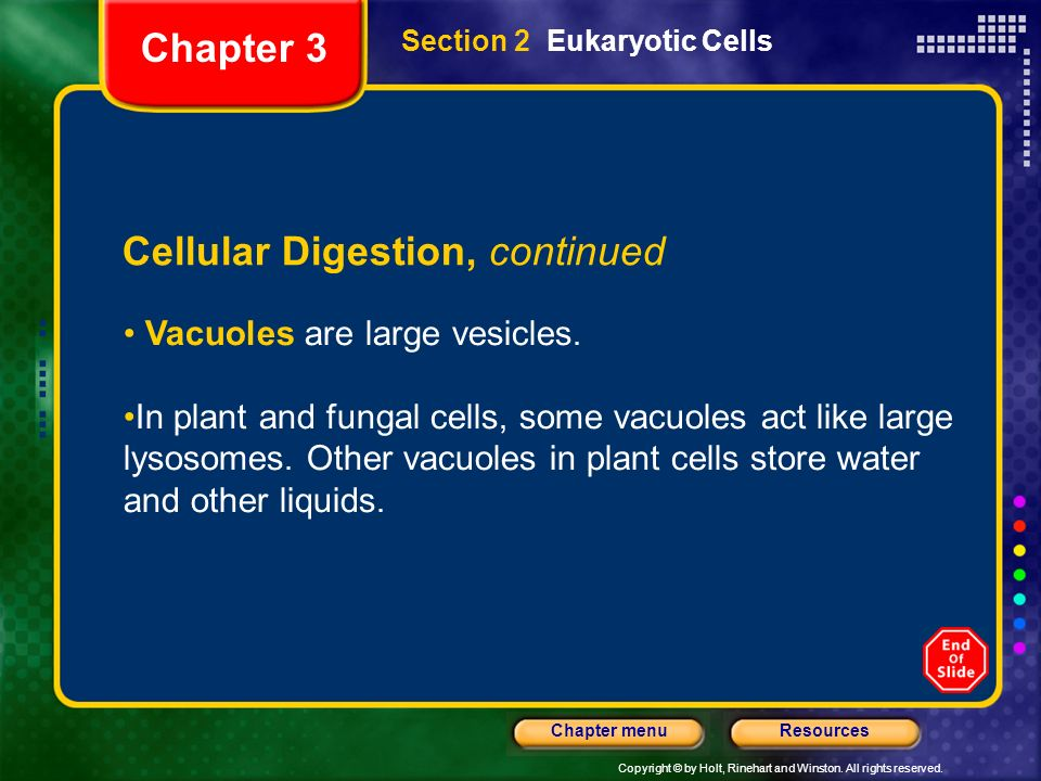 Copyright © by Holt, Rinehart and Winston. All rights reserved. ResourcesChapter menu Section 2 Eukaryotic Cells Cellular Digestion, continued Vacuole
