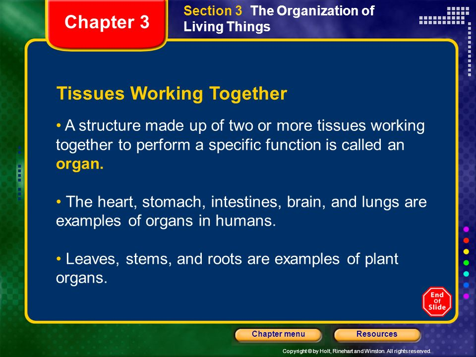 Copyright © by Holt, Rinehart and Winston. All rights reserved. ResourcesChapter menu Section 3 The Organization of Living Things Tissues Working Toge