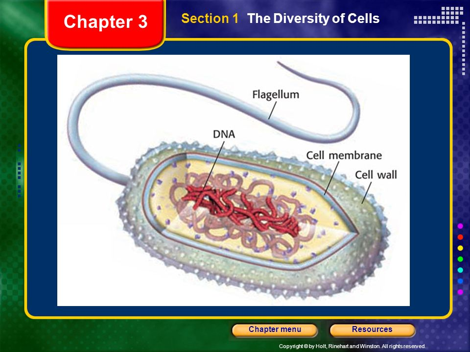 Copyright © by Holt, Rinehart and Winston. All rights reserved. ResourcesChapter menu Section 1 The Diversity of Cells Chapter 3