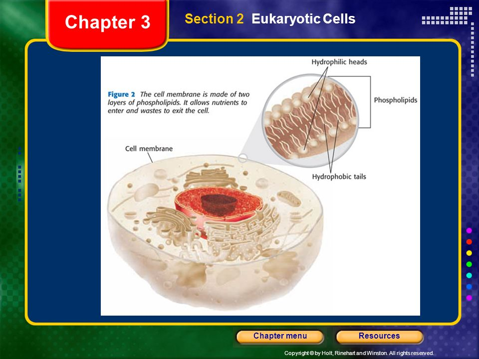 Copyright © by Holt, Rinehart and Winston. All rights reserved. ResourcesChapter menu Section 2 Eukaryotic Cells Chapter 3