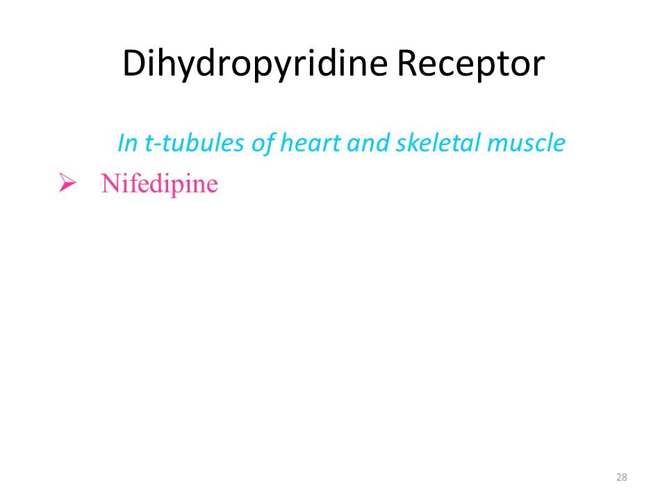 28 Dihydropyridine Receptor In t-tubules of heart and skeletal muscle Nifedipine and other DHP-like molecules bind to the