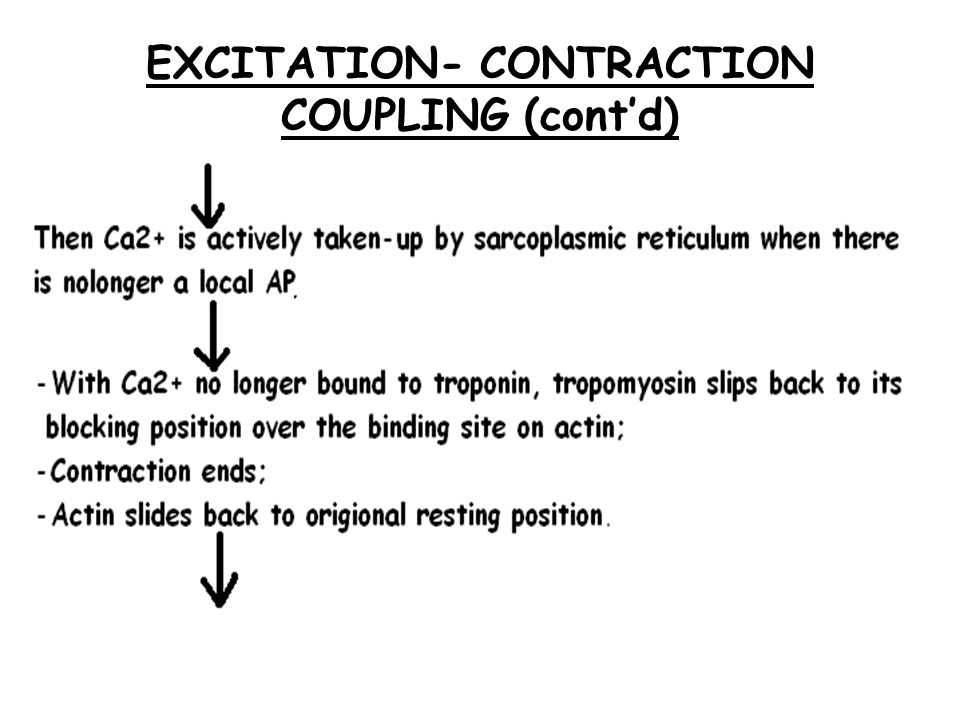 36 Excitation-Contraction Coupling Depolarization of motor end plate (excitation) is coupled to muscular contraction Nerve impulse travels along sarcolemma and down T-tubules to cause a release of Ca 2+ from SR Ca 2+ binds to troponin and causes position change in tropomyosin, exposing active sites on actin Permits strong binding state between actin and myosin and contraction occurs ATP is hydrolyzed and energy goes to myosin head which releases from actin
