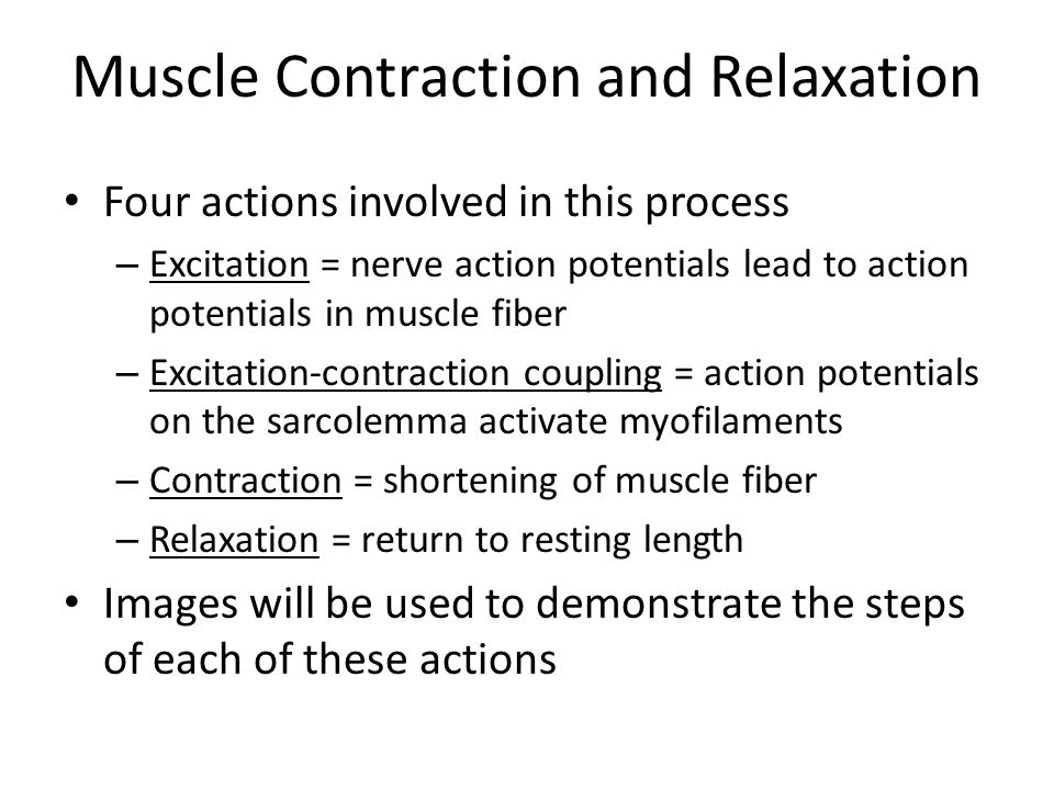 Muscle Contraction and Relaxation Four actions involved in this process – Excitation = nerve action potentials lead to action potentials in muscle fib
