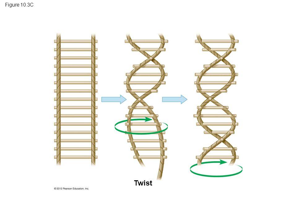 Figure 10.3C Twist
