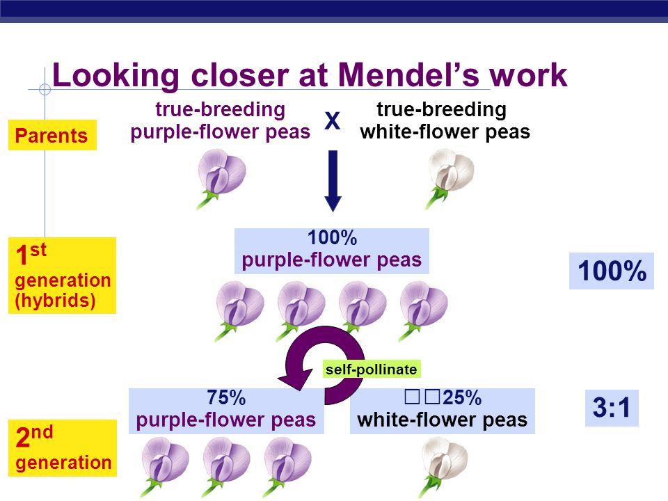 Regents Biology 2 nd generation 3:1 75% purple-flower peas 25% white-flower peas Looking closer at Mendels work Parents 100% 1 st generation (hybrids) 100% purple-flower peas X true-breeding purple-flower peas true-breeding white-flower peas self-pollinate