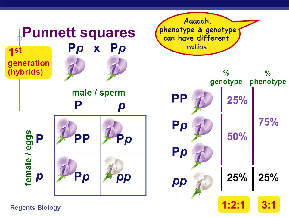 Regents Biology Making crosses Can represent alleles as letters flower color alleles P or p true-breeding purple-flower peas PP true-breeding white-fl