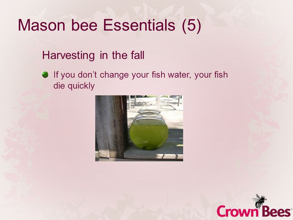 Mason bee Essentials (5) Harvesting in the fall If you dont change your fish water, your fish die quickly