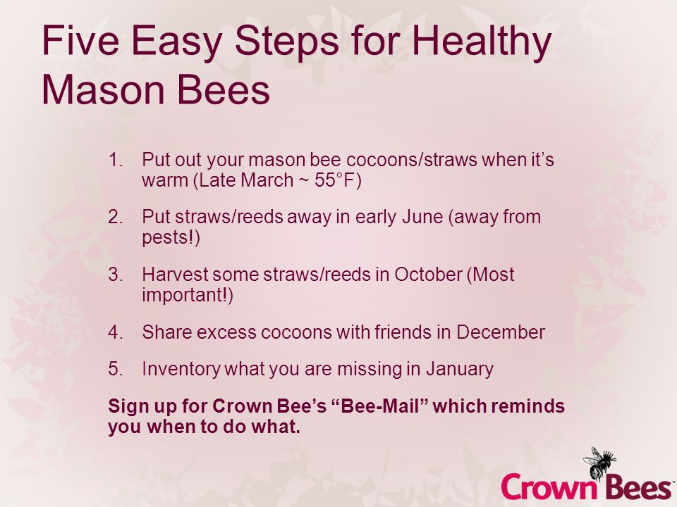 Five Easy Steps for Healthy Mason Bees 1.Put out your mason bee cocoons/straws when its warm (Late March ~ 55°F) 2.Put straws/reeds away in early June (away from pests!) 3.Harvest some straws/reeds in October (Most important!) 4.Share excess cocoons with friends in December 5.Inventory what you are missing in January Sign up for Crown Bees Bee-Mail which reminds you when to do what.