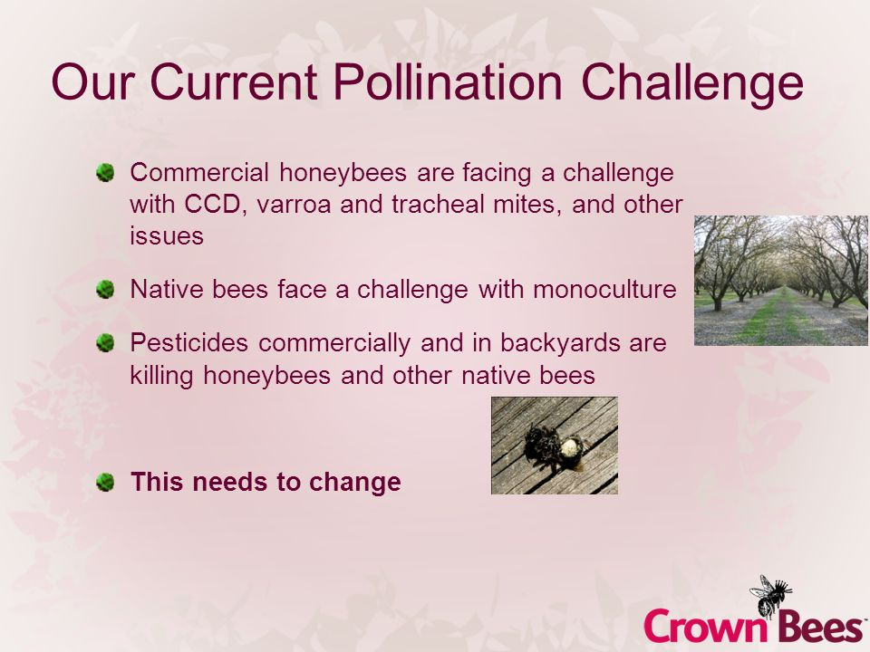 Our Current Pollination Challenge Commercial honeybees are facing a challenge with CCD, varroa and tracheal mites, and other issues Native bees face a challenge with monoculture Pesticides commercially and in backyards are killing honeybees and other native bees This needs to change