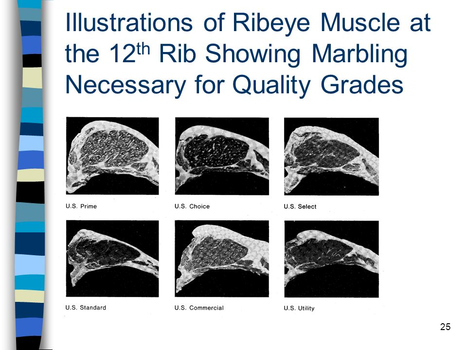 25 Illustrations of Ribeye Muscle at the 12 th Rib Showing Marbling Necessary for Quality Grades
