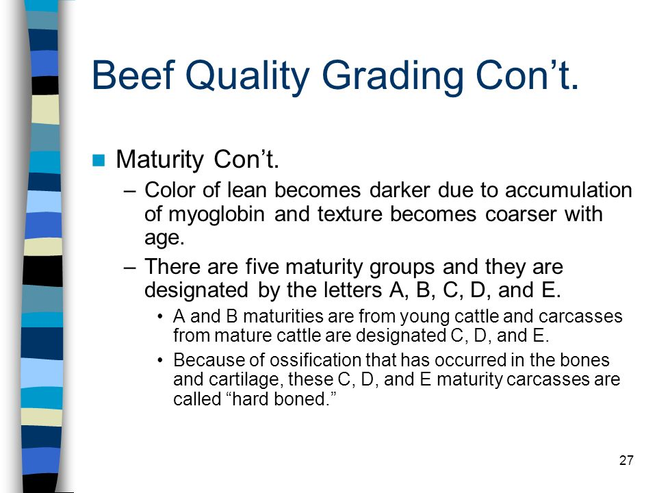 27 Beef Quality Grading Cont. Maturity Cont. –Color of lean becomes darker due to accumulation of myoglobin and texture becomes coarser with age. –The