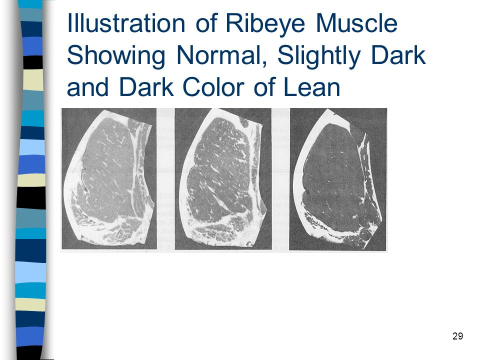 29 Illustration of Ribeye Muscle Showing Normal, Slightly Dark and Dark Color of Lean