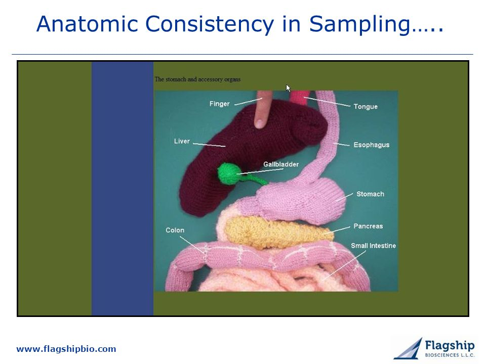 www.flagshipbio.com Anatomic Consistency in Sampling…..