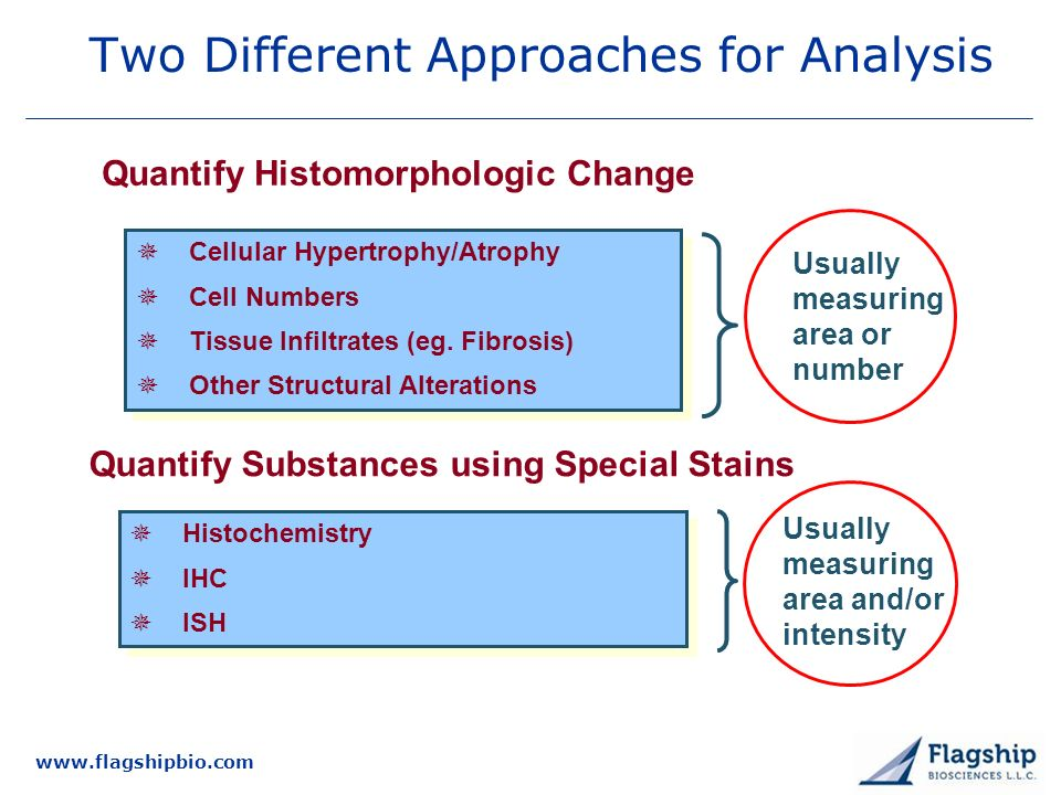 www.flagshipbio.com Two Different Approaches for Analysis Cellular Hypertrophy/Atrophy Cell Numbers Tissue Infiltrates (eg.