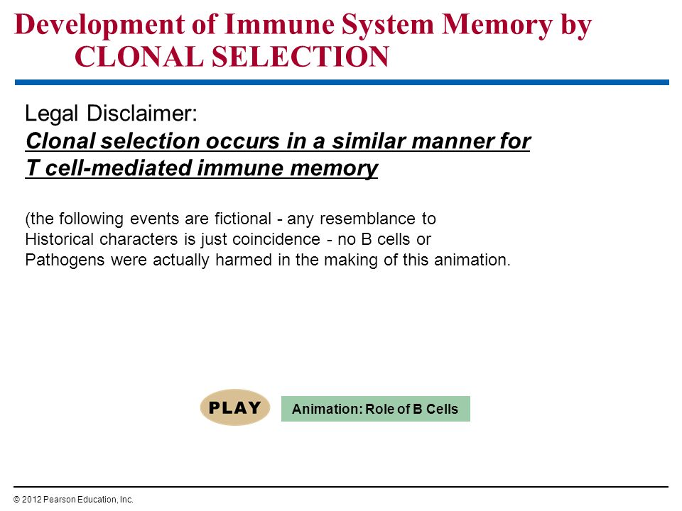 Development of Immune System Memory by CLONAL SELECTION © 2012 Pearson Education, Inc. Animation: Role of B Cells Legal Disclaimer: Clonal selection o