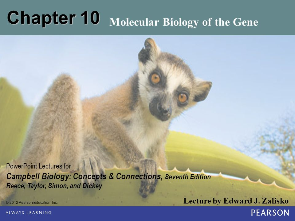 © 2012 Pearson Education, Inc. Lecture by Edward J. Zalisko PowerPoint Lectures for Campbell Biology: Concepts & Connections, Seventh Edition Reece, T