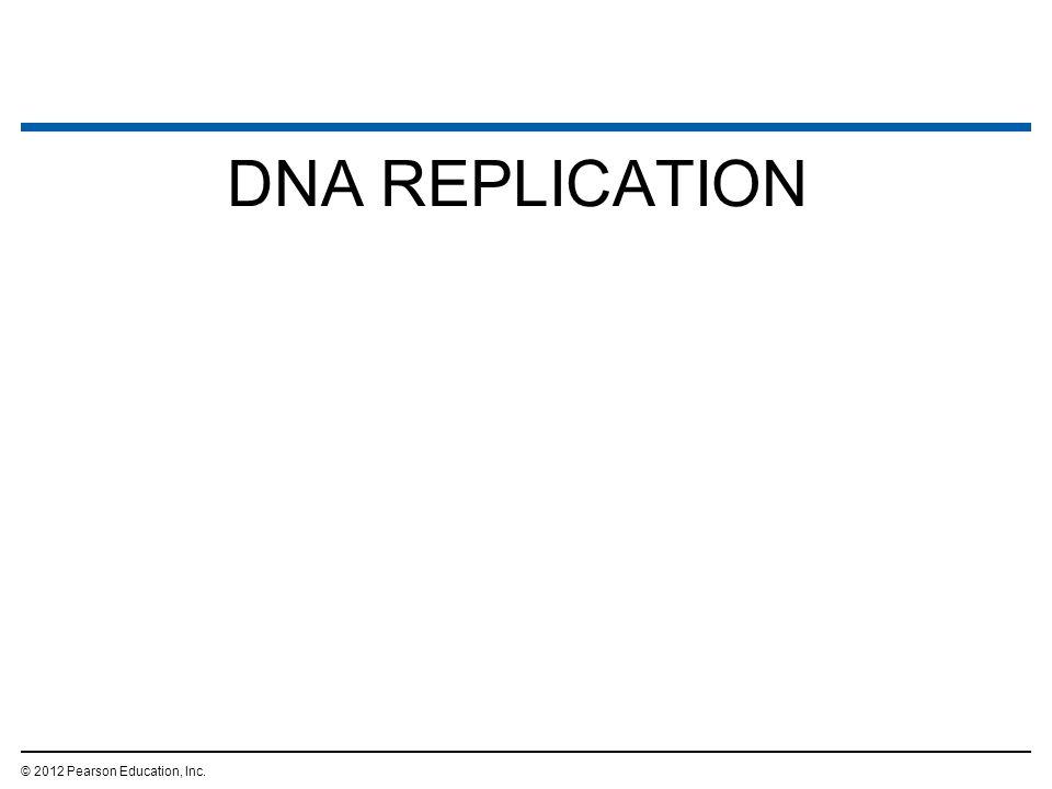 DNA REPLICATION © 2012 Pearson Education, Inc.
