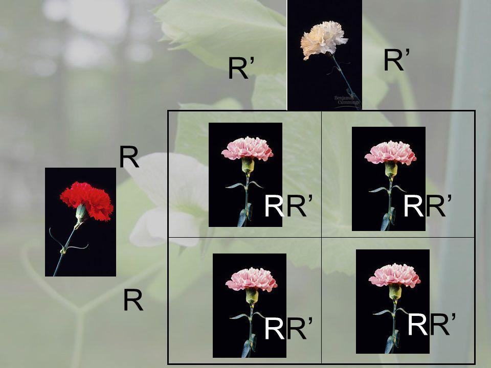 R R R R RR R R