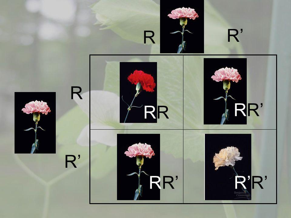 R R R R R R R R