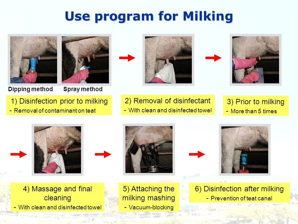 Use program for Milking 1) Disinfection prior to milking - Removal of contaminant on teat Dipping methodSpray method 2) Removal of disinfectant - With