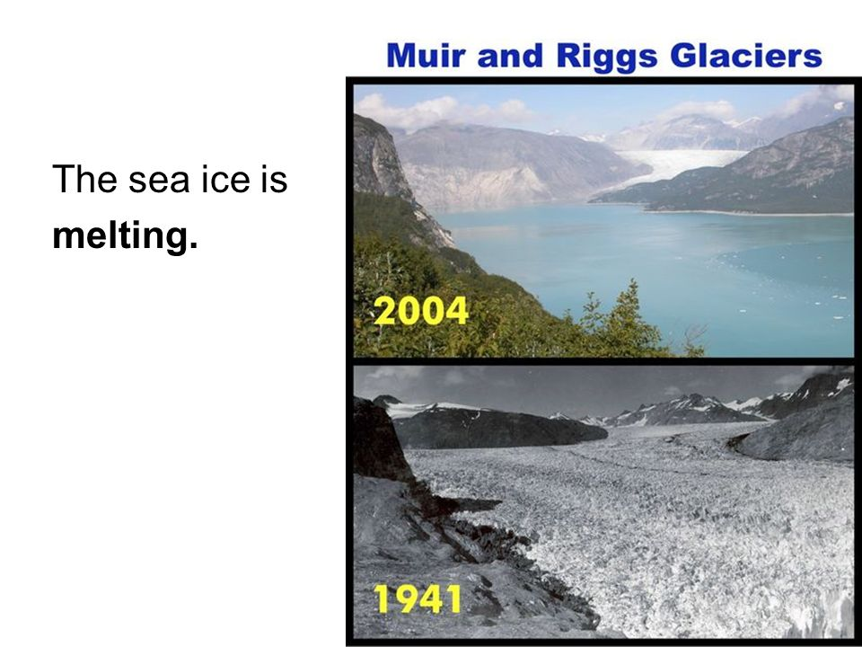 The sea ice is melting.