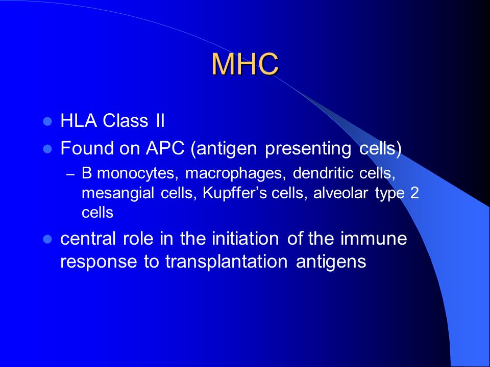 MHC HLA Class II Found on APC (antigen presenting cells) – B monocytes, macrophages, dendritic cells, mesangial cells, Kupffers cells, alveolar type 2