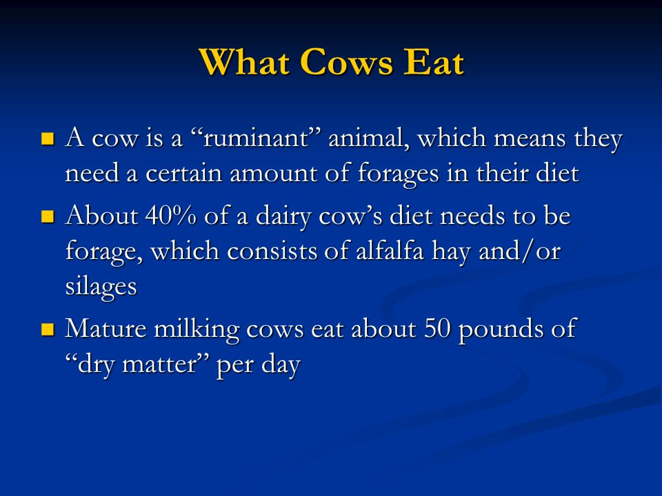 What Cows Eat A cow is a ruminant animal, which means they need a certain amount of forages in their diet A cow is a ruminant animal, which means they