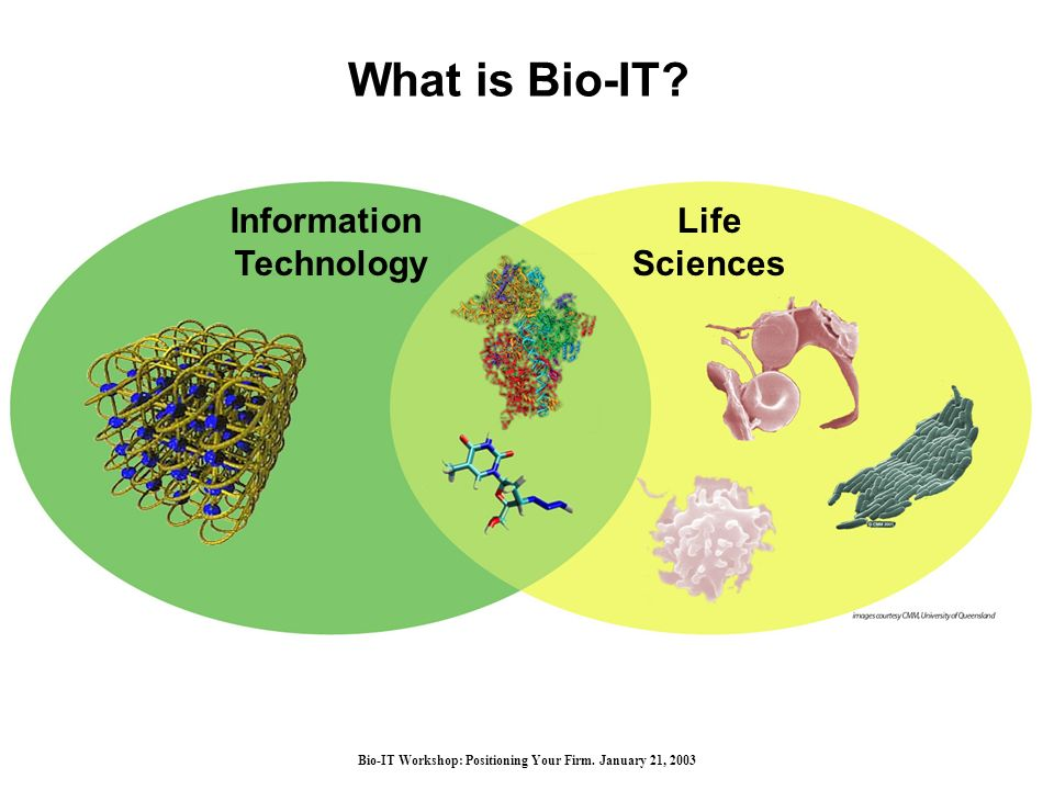 Bio-IT Workshop: Positioning Your Firm. January 21, 2003 What is Bio-IT.