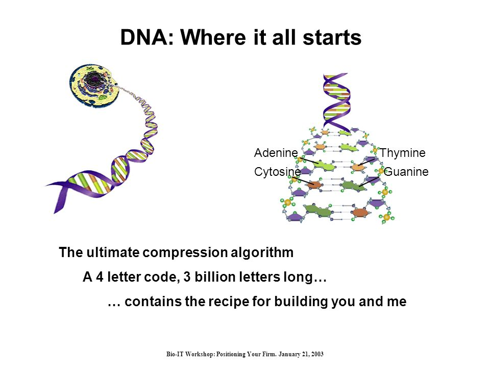 Bio-IT Workshop: Positioning Your Firm. January 21, 2003 DNA: Where it all starts AdenineThymine GuanineCytosine The ultimate compression algorithm A
