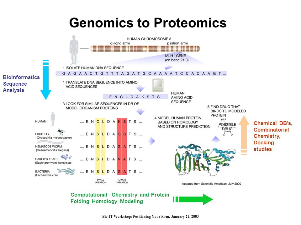 Bio-IT Workshop: Positioning Your Firm. January 21, 2003 Genomics to Proteomics Computational Chemistry and Protein Folding Homology Modeling Bioinfor