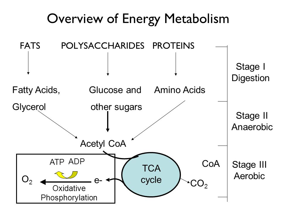Overview of Energy Metabolism FATS POLYSACCHARIDES PROTEINS Fatty Acids, Glucose and Amino Acids Glycerol other sugars Stage I Digestion Acetyl CoA St
