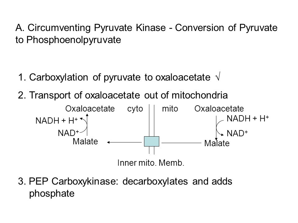 1.Carboxylation of pyruvate to oxaloacetate 2.Transport of oxaloacetate out of mitochondria mitocytoOxaloacetate Malate NADH + H + NAD + Malate Oxaloa